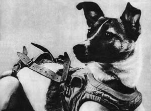Laika the Russian Dog